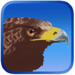 Eagle Hunting Journey 1.53 APK (MOD, Unlimited Money)