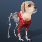 Idle Pet – Create cell by cell 5.3 APK (MOD, Unlimited Money)