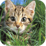 Cute Cats Live Wallpapers 10.71 APK (Premium Cracked)
