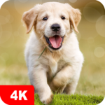 Dog Wallpapaers & Puppy Backgrounds 5.0.62 (MOD, Unlimited Money)