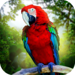 Jungle Parrot Simulator – try wild bird survival! 1.3.1 APK (Premium Cracked)