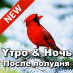 Russian Good Morning Afternoon & Good Night Wishes 9.10.00.2 (MOD, Unlimited Money)