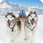 Snow Dog Sledding Transport Games: Winter Sports 1.5(MOD, Unlimited Money)