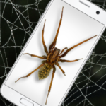 Spider in Phone Funny Joke – iSpider 1.0 (MOD, Unlimited Money)