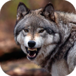 Wolf Wallpaper HD : backgrounds & themes 11.1 APK (Premium Cracked)