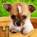 Dogs Jigsaw Puzzles Game – For Kids & Adults 🐶 25.1 (MOD, Unlimited Money)
