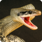 Anaconda Rampage: Giant Snake Attack 2.112 (MOD, Unlimited Money)