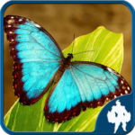 Butterfly Jigsaw Puzzles 1.9.18 APK (MOD, Unlimited Money)