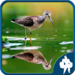 Reflection Jigsaw Puzzles 1.9.17 APK (MOD, Unlimited Money)