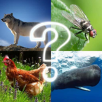 🐷 Zoo sounds quiz 🐷 4.8 APK (MOD, Unlimited Money)