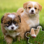 Dogs & Cats Puzzles for kids & toddlers 2 🐱🐩 2021.44  APK (MOD, Unlimited Money)